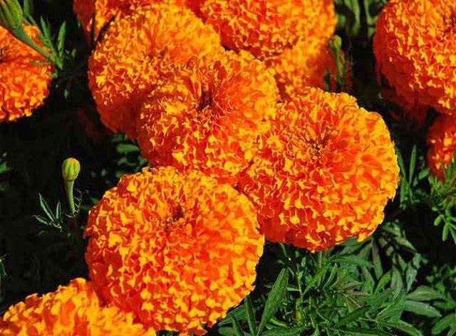 धनुषामा माग अनुसार फूल उत्पादन हुन सकेन