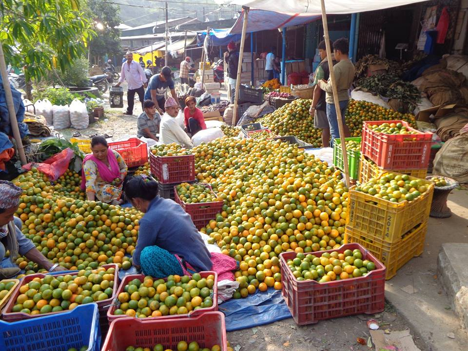 धरान बजारमा सुन्तला विक्री गर्दै व्यापारी । तस्विर : हलोखबर